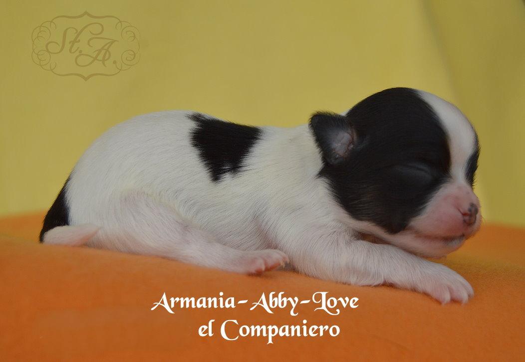Armania1704-5