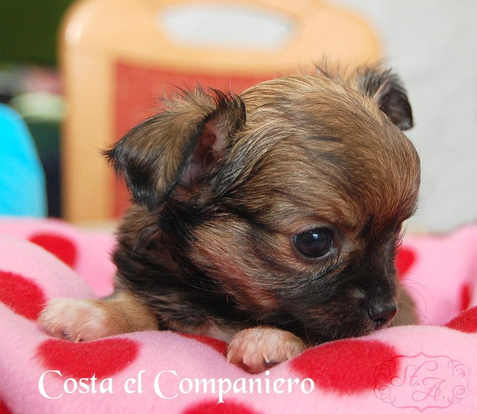 costafeb15-2