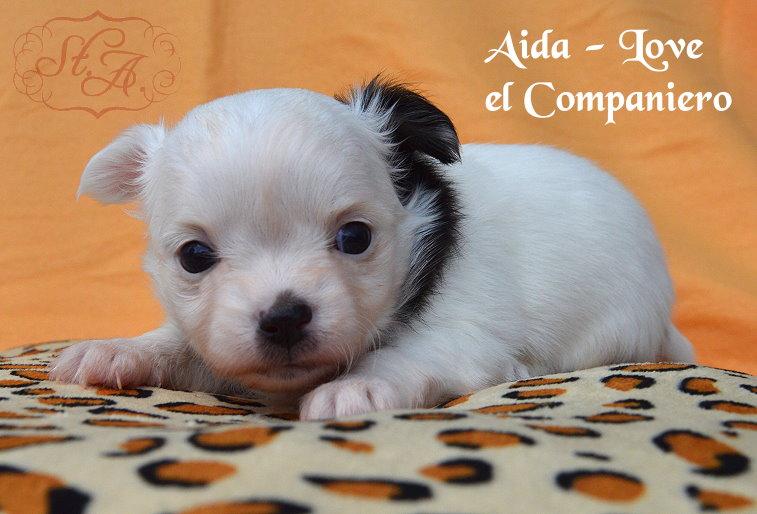 Aida8.5-1