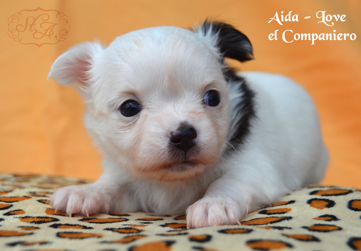 Aida8.5-4