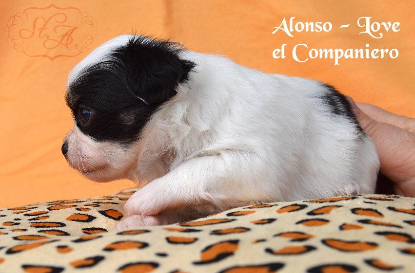 Alonso8.5-5