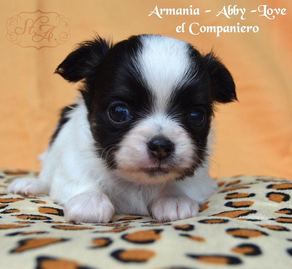 armania8.5-2