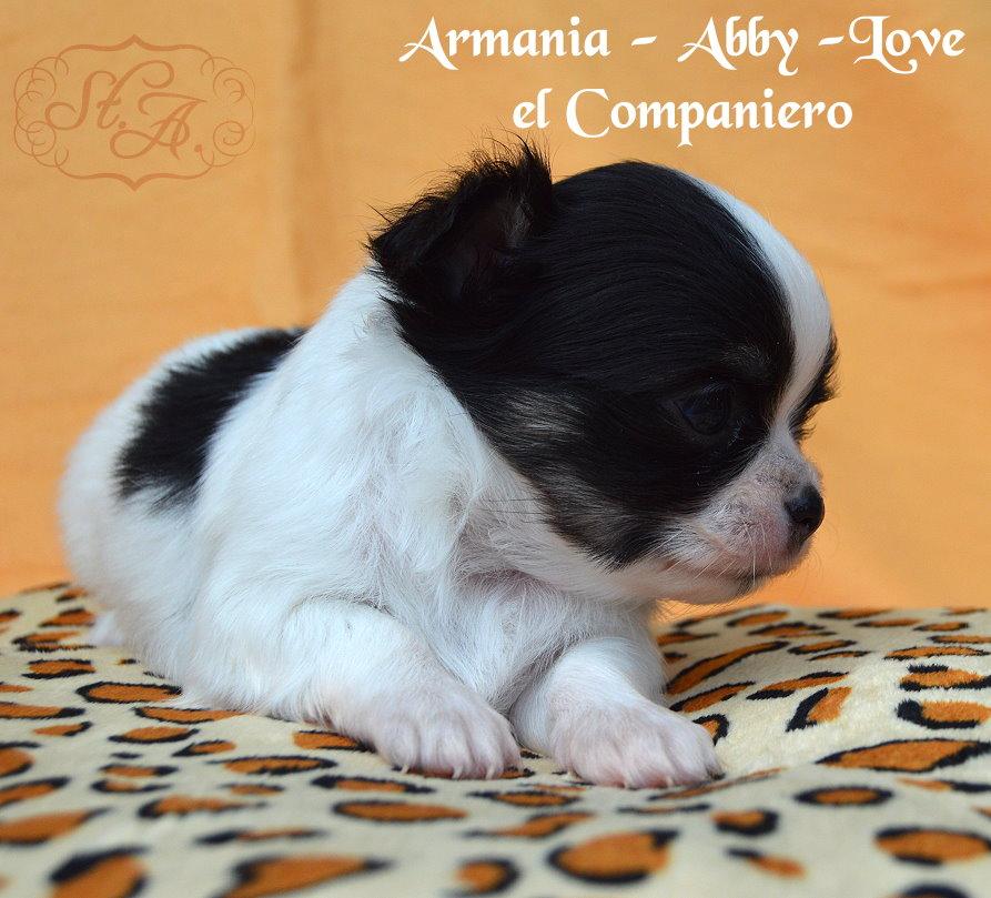 armania8.5-3