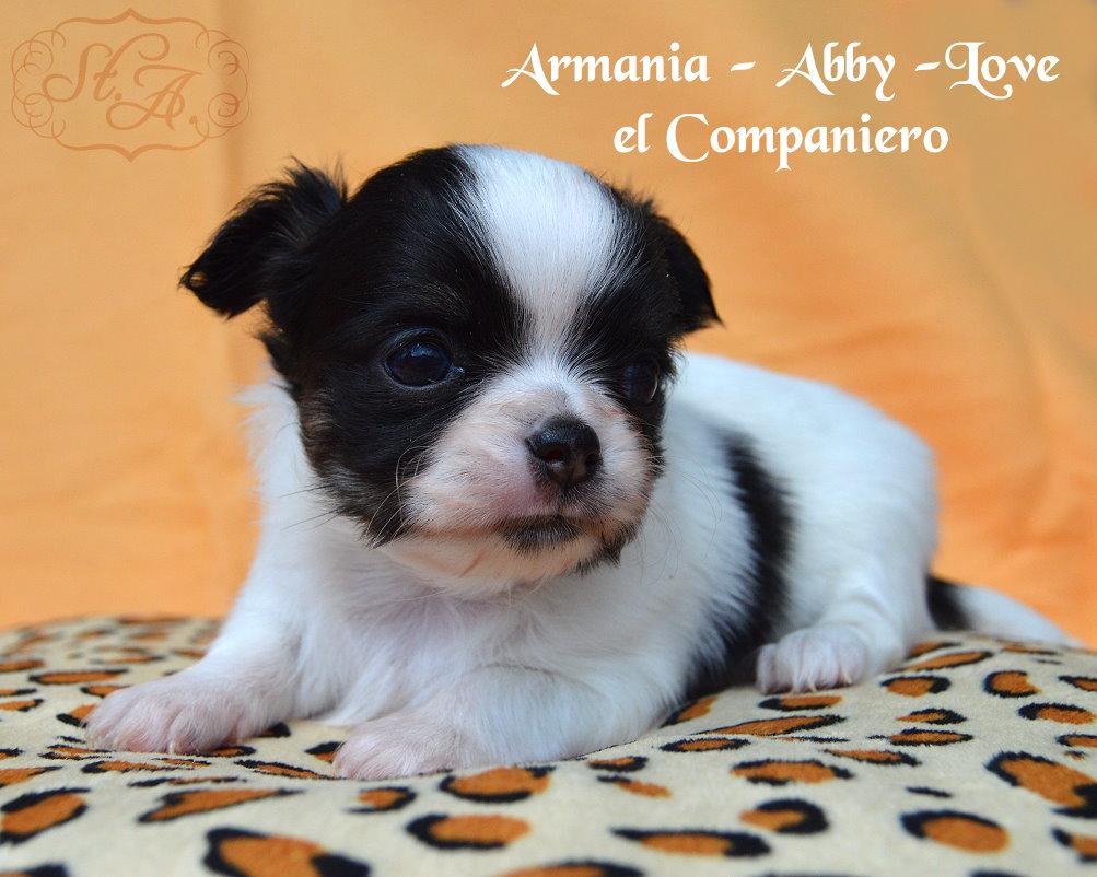 armania8.5-4