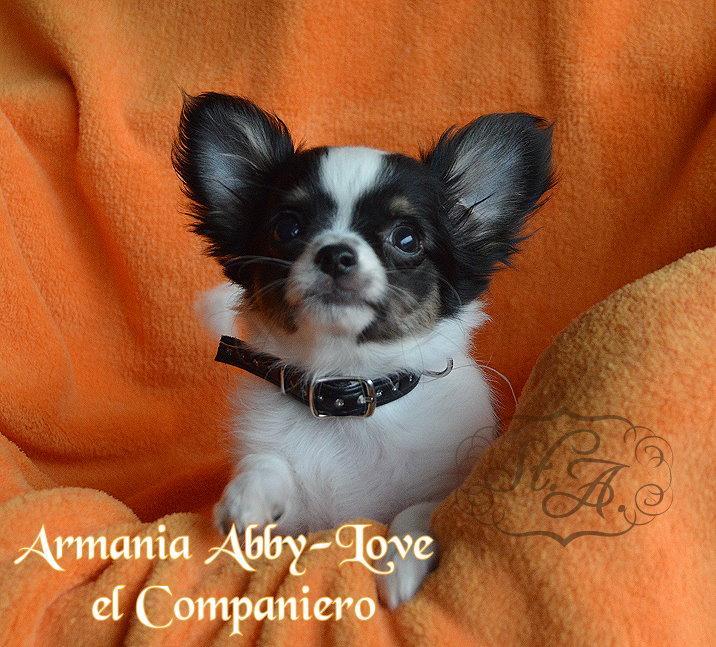 Abby270613-1