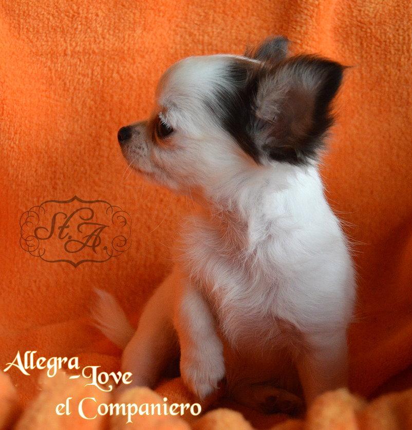 Allegra2706-20