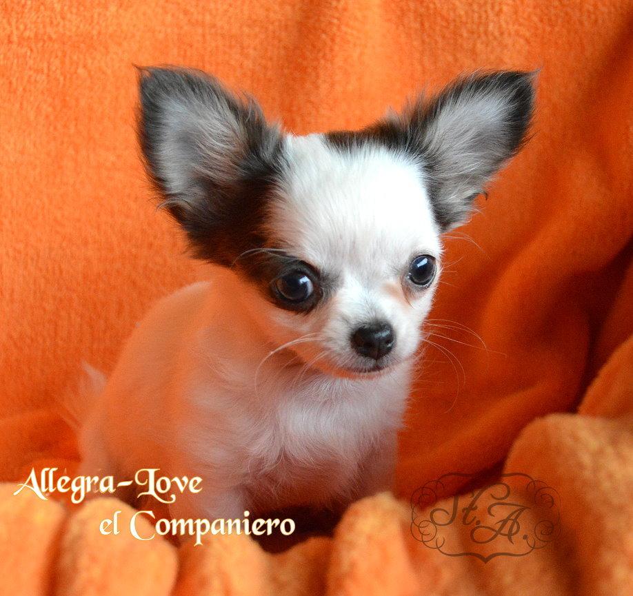 Allegra2706-30