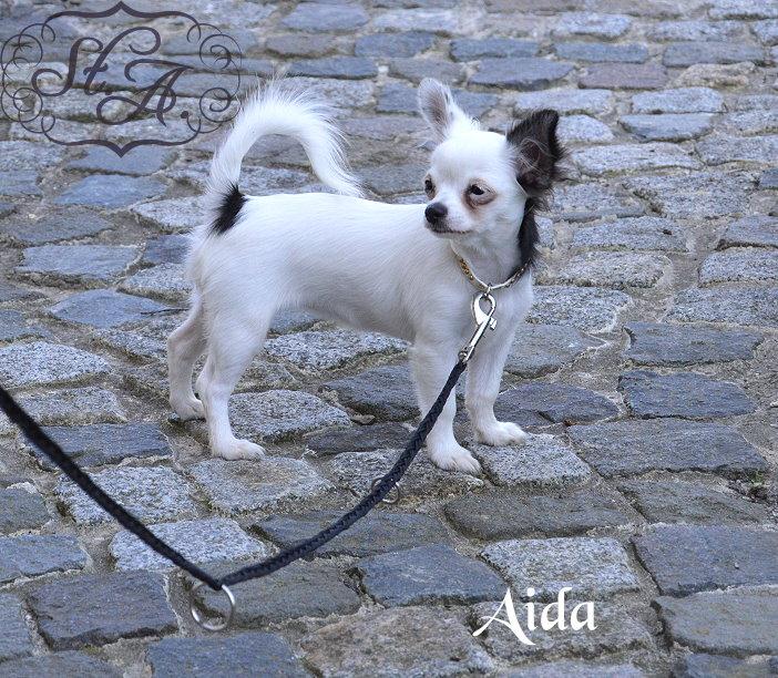 Aida21813-1