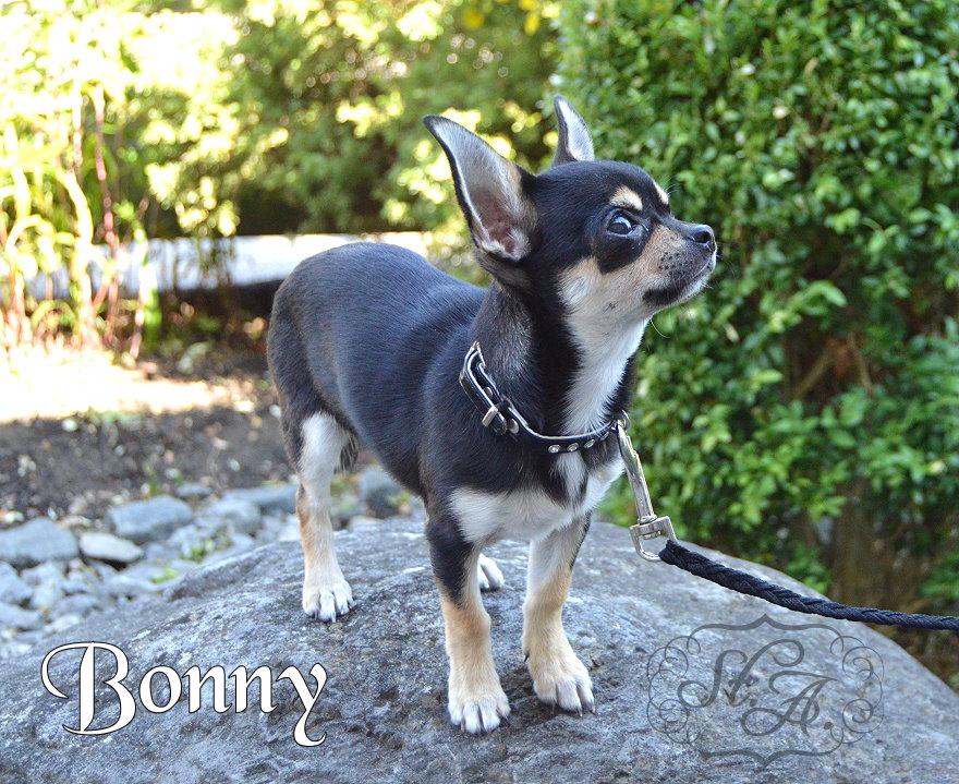 Bonny21813-1