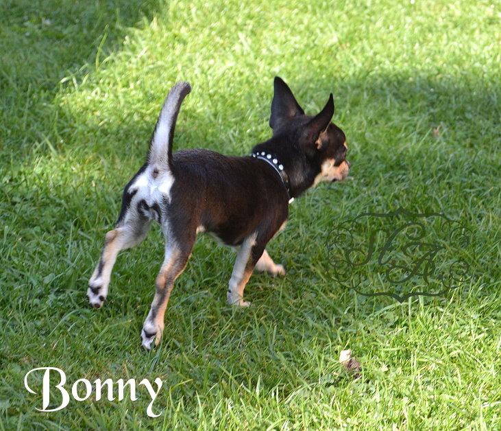 Bonny21813-4