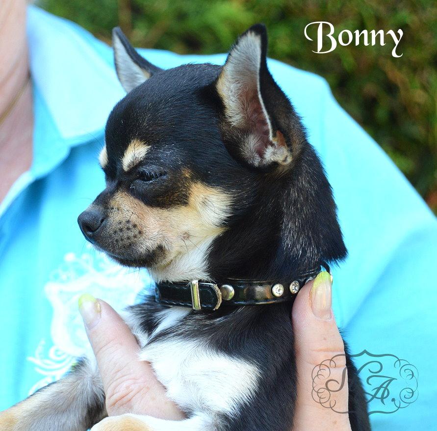 Bonny21813-5