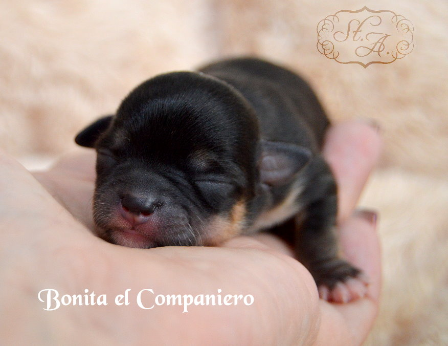 Bonita53-3