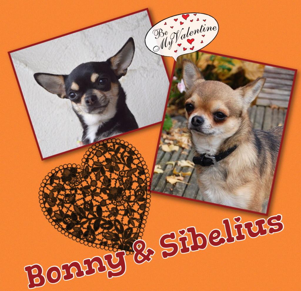 Bonny&Sibelius